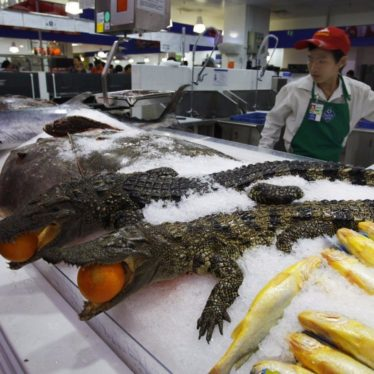 Sam's Club China: Buy Supplies, Food & Alligators