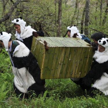 To Fool a Panda, You Gotta Be a Panda!
